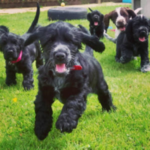 Charity on the search for dog lovers
